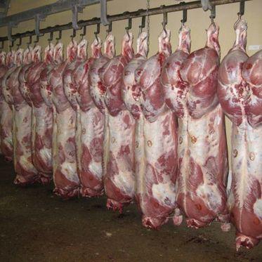 Vleesgroothandel Jos Leemput (Hoofdzetel) - Slachthuis